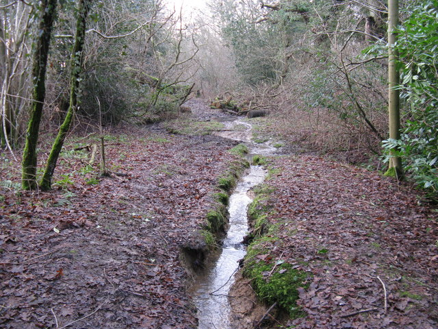 Stream and Sussex Border Path in Dickhurst Great Copse