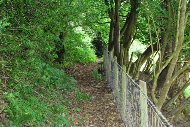 Taith Clwyd squeezed between a fence and woodland