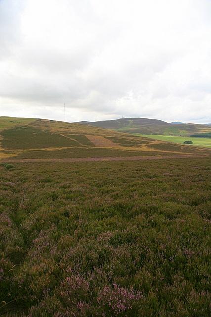 Heather moorland on Finlarg Hill