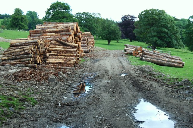Felled timber ready for collection