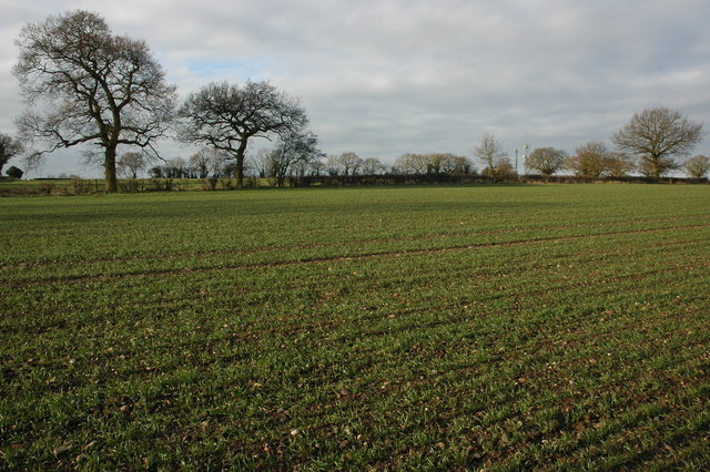 Field of winter cereal near Inkberrow