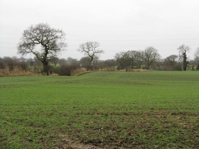 Fields Off Bradwall Road