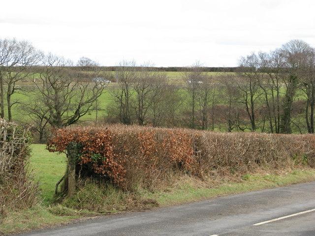 Fields near Pixie Plain