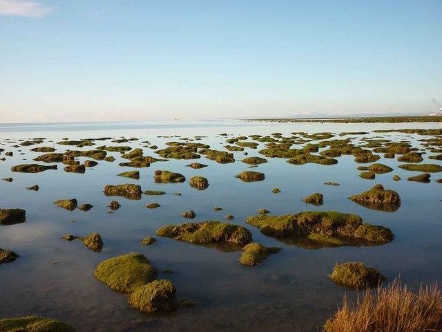 Salt marsh, west coast of Sunderland Point