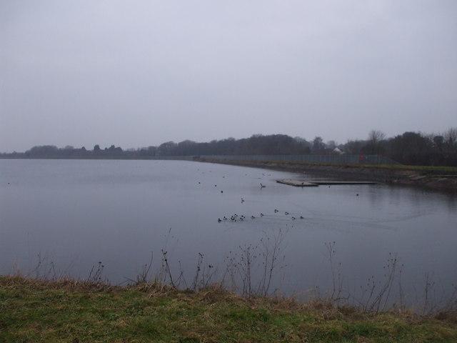 Wildfowl on Lisvane reservoir, Cardiff