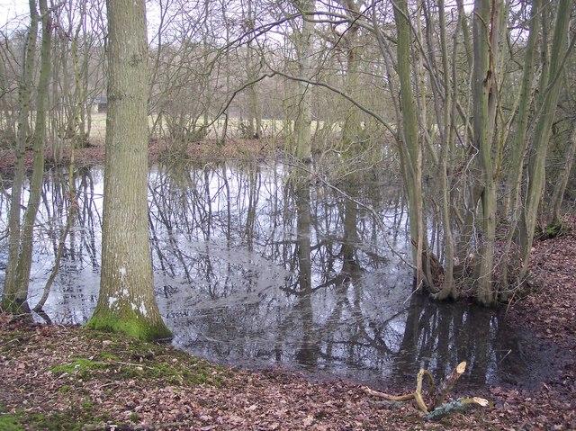 Pond behind Journey's End