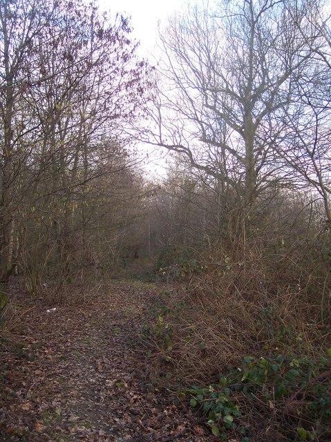 Footpath in Ruck Wood