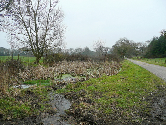 Marshy area by a road