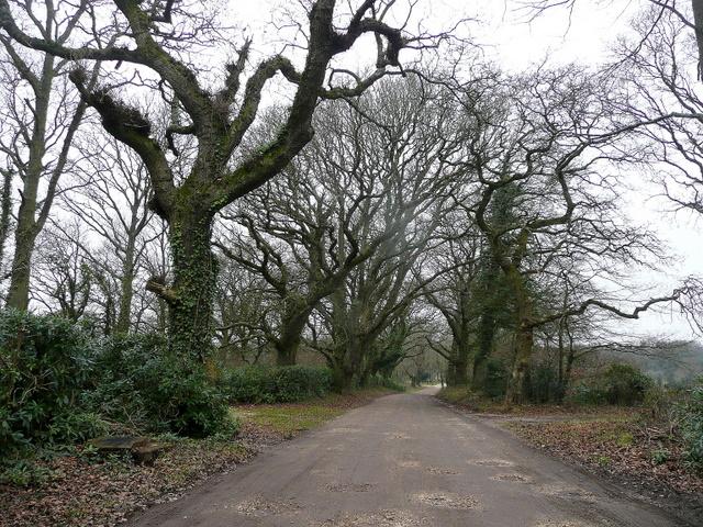 Oak-lined lane