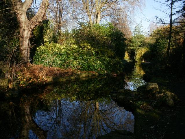 Tree reflections at New River Walk