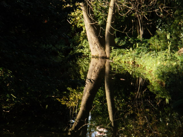 Tree reflections (zoom version)