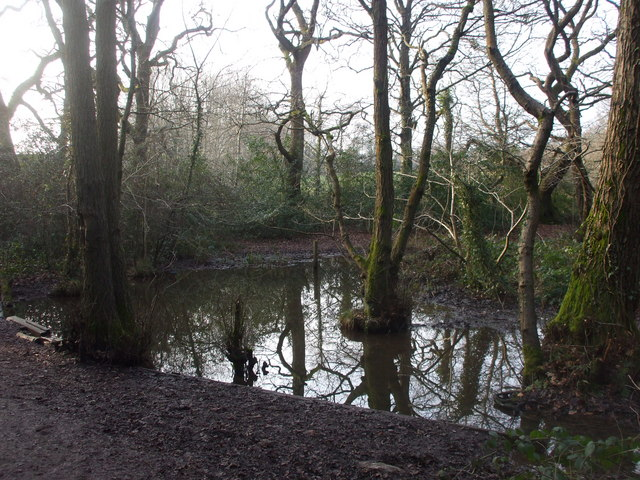 Pool in woodland beside the Nant Fawr, Cardiff