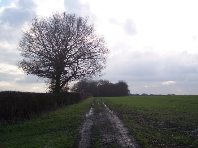 Byway to Calais Wood