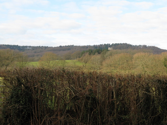 Hedgerow view towards Haslemere