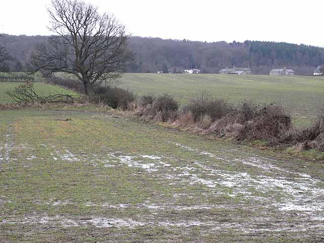 Fields near Woodfoot