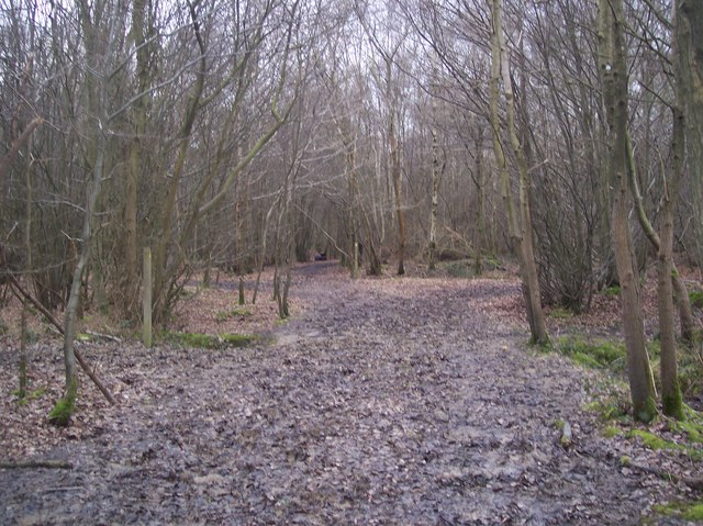 Staggered footpath junction in Purchase Wood