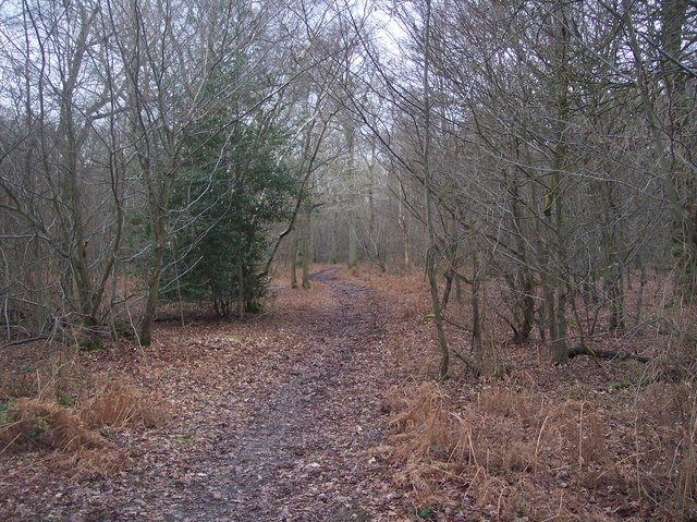 Footpath in Purchase Wood
