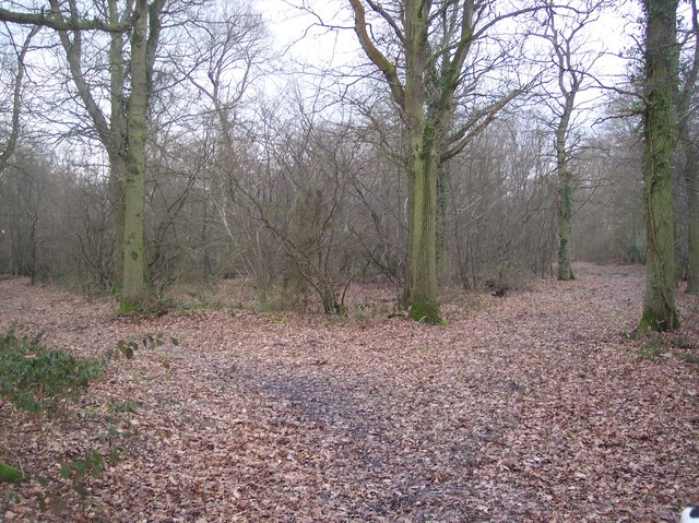 Footpath and track junction in Purchase Wood