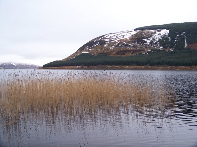 Reeds At St Mary's Loch