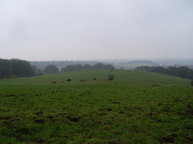 Cows grazing on Bar Hill