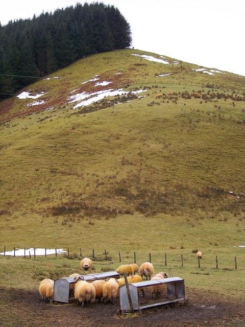 Hill Sheep Farmland