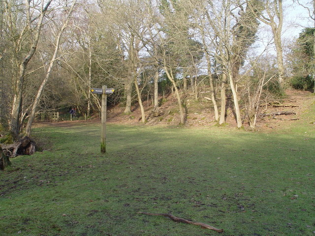 Footpath Junction in Scout Wood