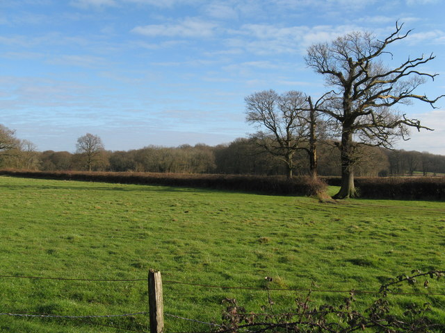 Field view to Greenland Copse