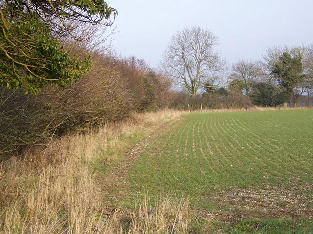 Hedge near Woodyates