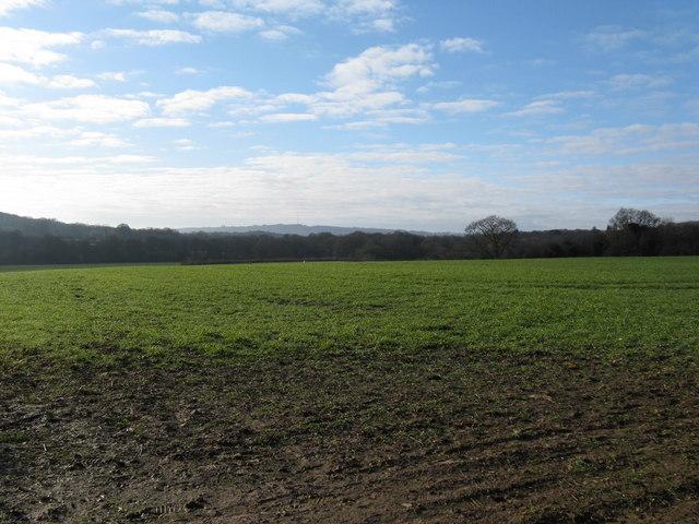 View across open grass field