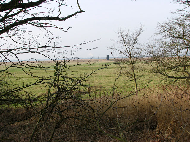 Belton Marshes east of the River Waveney
