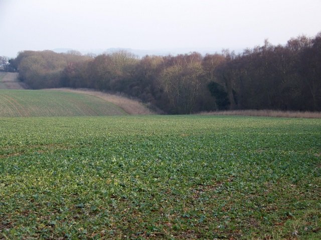 Root crops, Vernditch