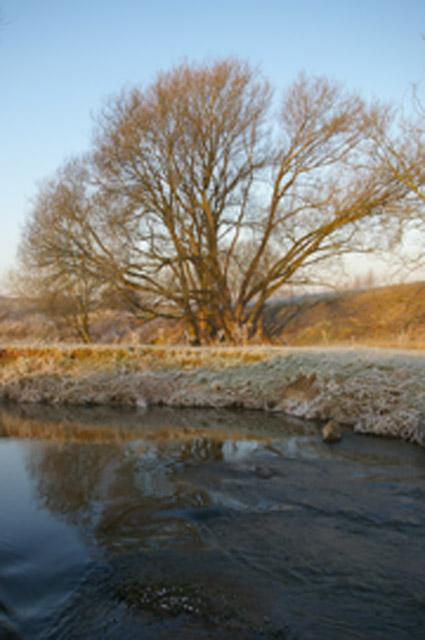 Tree by River Wheelock in winter