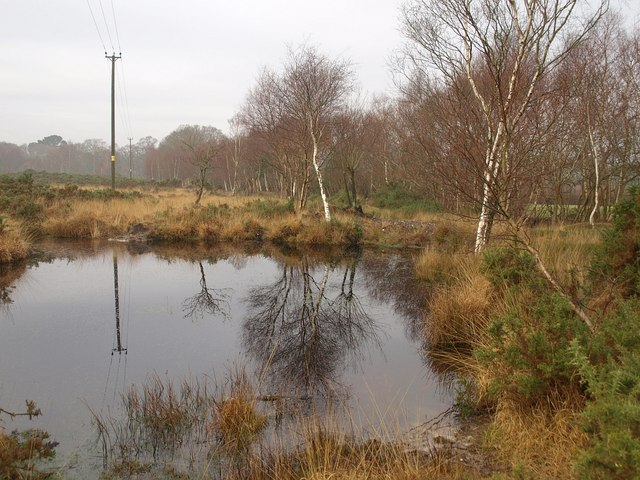Pool on Stoborough Heath