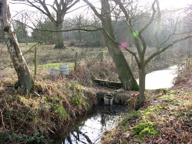 Drain beside woodland pasture south of Marsh Lane