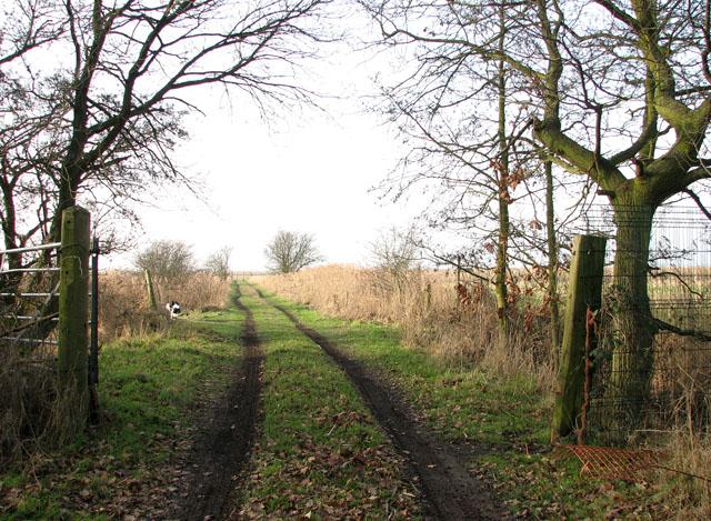 Into the Belton Marshes on Marsh Lane