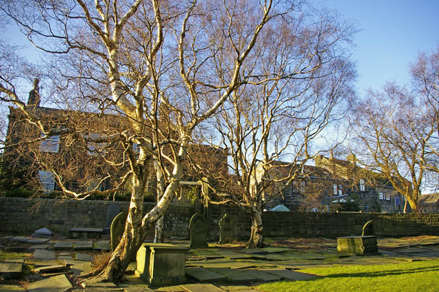 Birch trees in Heptonstall churchyard