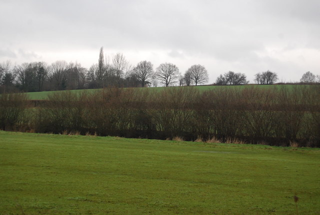 Line of trees along the field edge