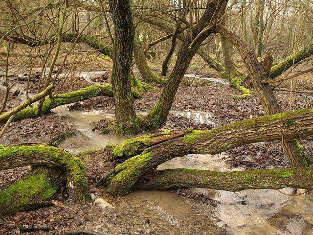 Woodland stream, Stoborough Heath