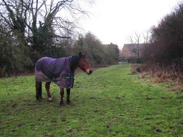 Horse with winter coat on