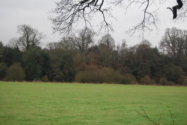 Woodland on the edge of Penshurst