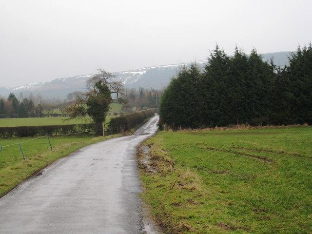 Roadside plantation near Folly Farm