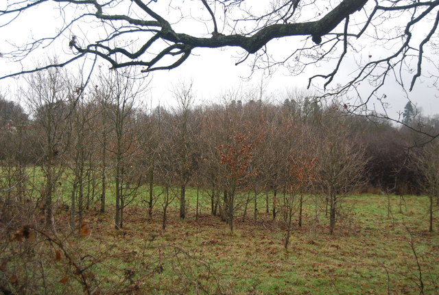 Young trees by the bridleway