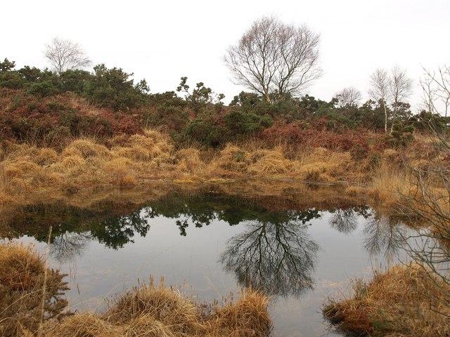 Pool on Stoborough Heath