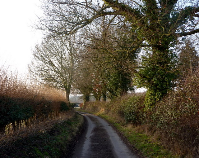 Lane near Erpingham Church