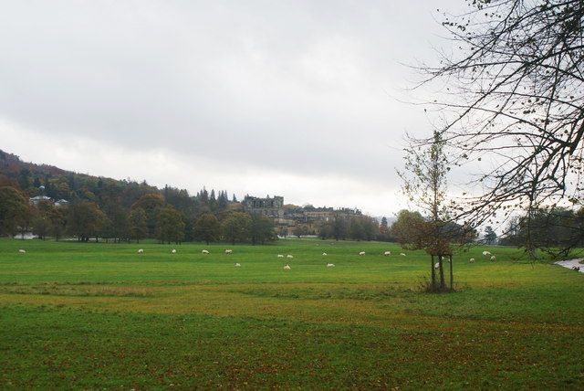 Sheep grazing in Chatsworth Park