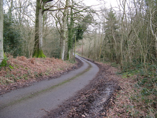 Bridleway through Chafold Copse