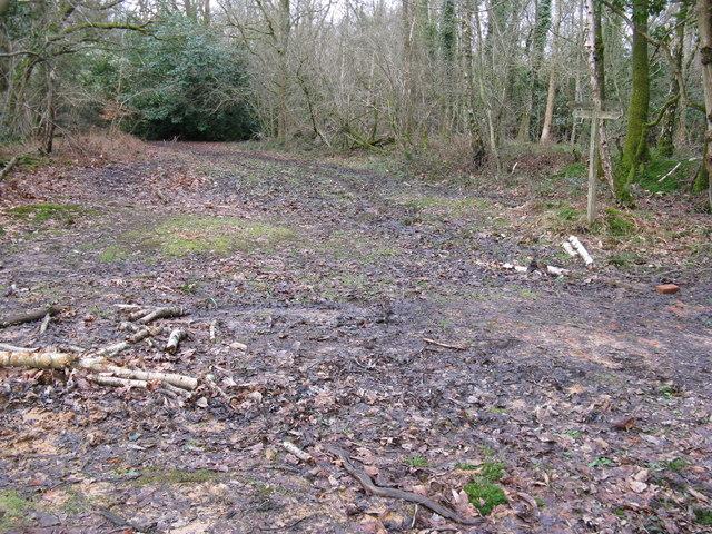 Bridleway junction between Burrell's Wood and Wet Wood