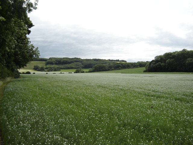 Field  of  Linseed