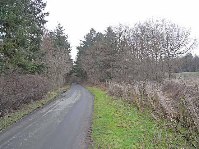 Edge of Broomley Hope Wood