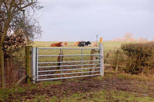 Bridleway gate near Calcutt Spinney
